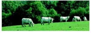 groupe échange bovins viande